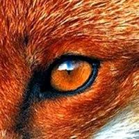 Friday's Fox / Fridays Fox / FridaysFox Logo